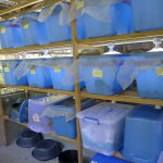 Field cricket breeding room